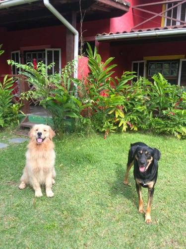 Pet or pets staying with guests at Pousada Portal do Cacau