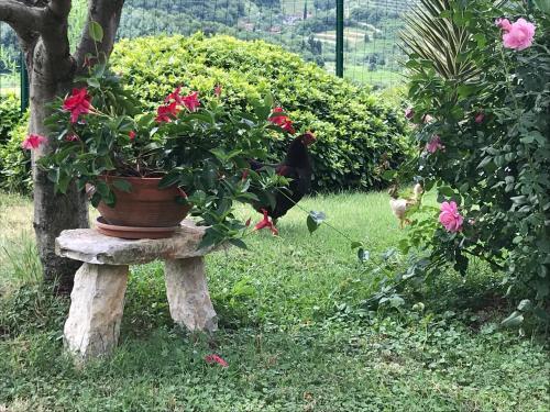 A garden outside Apartments Krt Mirko