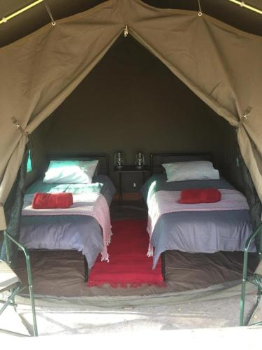 A bed or beds in a room at Madisa Bush Camp