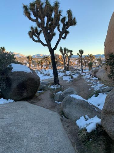 Joshua Tree Green Oasis during the winter