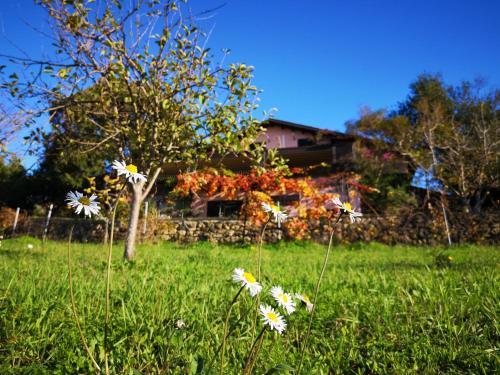 Giardino di La Tinaia
