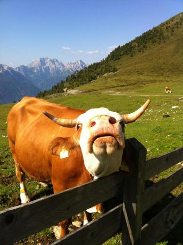 Tiere in der Pension oder in der Nähe