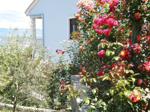 A garden outside Villa Roze