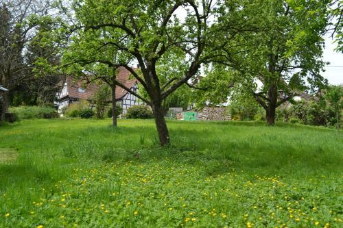 Jardin de l'établissement Ferienidyll Cleebourg