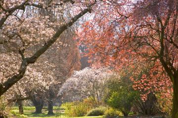 Christchurch: Rental mobil di 6 titik pengambilan