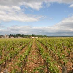 Vougeot 4 hotely