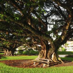 Palm Beach Gardens 27 hotels