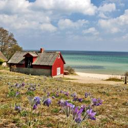 Kivik 3 pet-friendly hotels