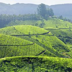 Munnar 20 self catering properties