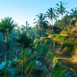 Ubud 124 boutique hotels