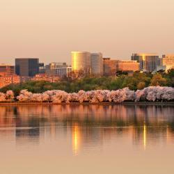 Arlington 141 hoteller