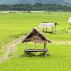 Louang Namtha 5 guest houses