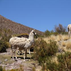 Cochabamba 170 hotellia
