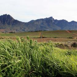 Tulbagh 8 farm stays