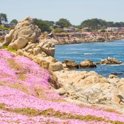 Pacific Grove 88 hotels