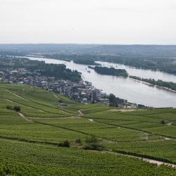 Rheinau 10 Hotels
