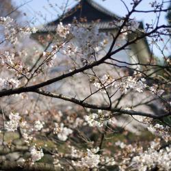 Koriyama 32 hotels