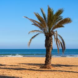 Canet de Berenguer 14 pet-friendly hotels