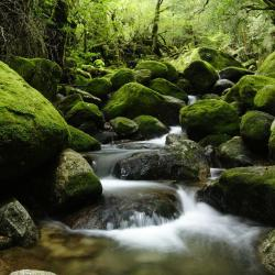 Yakushima 5 lodges