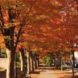 Princeton 27 hotels
