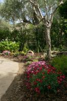 Giardino Di Annius