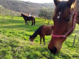 Na kmetiji s konji - Pogelšek