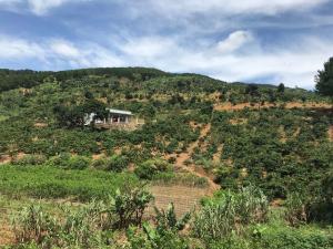 O.V coffee farmstay
