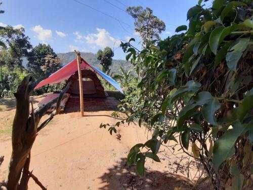 Ella Paradise Camping