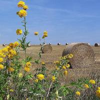 Agroturystyka u Krakusa