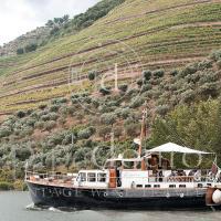 Pipadouro - Vintage Wine Travel