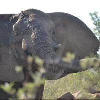Mabalingwe Elephant Lodge Unit 154 Kremetart