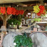 Agriturismo Fattoria Terranova