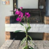La Guadalupe