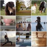 Ölands Yoga Studio, Stugor & Rum