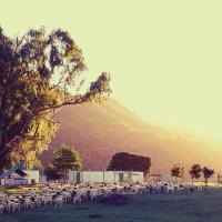 The Wild Olive Sanctuary Accommodation