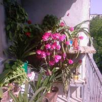 Бабушкин уют в РУСТАВИ