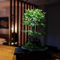 Bonsai Family Residence