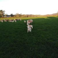 Conwy Pen Cefn Farm Holiday