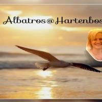 Albatros @ Hartenbos