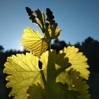 Domaine Alloïs - Gîte familial chez le vigneron