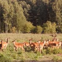 Deer SPA / Elnių SPA