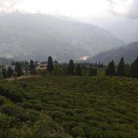 Parasol Temi Tea garden