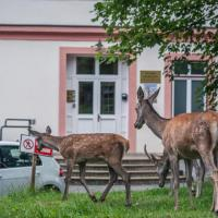 AC Apartmány Lomnica