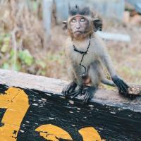 Monkey Bungalow