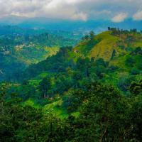 Shining Green View