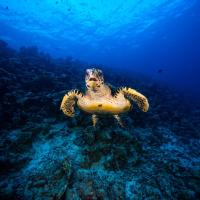 Scuba Divine Maldives - Dhangethi