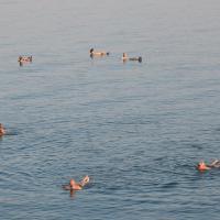 NEVE ZOHAR DEAD SEA