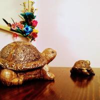 Happy Little Turtles