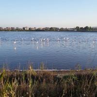 Flamingo view