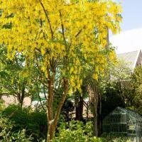 Vita Vivet mooie Airbnb met Zorg: Duindoorn